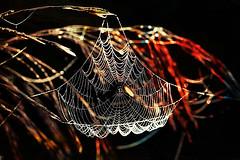 >>> Dream Weaver <<< (Creative Bling) Tags: dream weaver dreamweaver web spiderweb londonontario darrellcolby