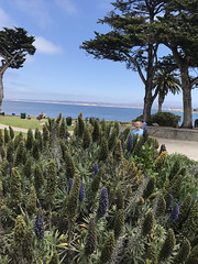 20180618_211648086_iOS (jimward85) Tags: montereybay pacificgrove california loverspoint
