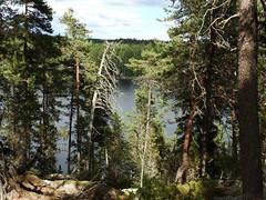 Lake Urja (Nuuksio national park, Espoo, 20180623) (RainoL) Tags: crainolampinen 2018 201806 20180623 esbo espoo finland forest geo:lat=6030725839 geo:lon=2460004728 geotagged june lake midsummerday nature nouxnationalpark nuuksionationalpark nuuksionkansallispuisto nyland p900 summer urja uusimaa velskola vällskog fin