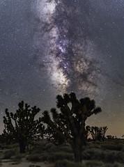 Night Sky Pano in the Mojave Desert (Geoffrey Hunt Photography) Tags: desert mojave california astrophotography landscape star stars galactic core milky way long exposure joshua