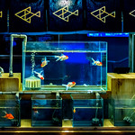 At Stall of goldfish selling (replica) in Sumida Aquarium in Tokyo Sky Tree Town : 金魚売りの屋台(東京スカイツリータウン・すみだ水族館) thumbnail