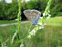 Butterfly 1712 (+1300000 views!) Tags: butterfly borboleta farfalla mariposa papillon schmetterling فراشة