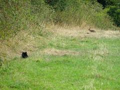 Behind you (Dun.can) Tags: hathersage peakdistrict derbyshire summer cat rabbit field farm