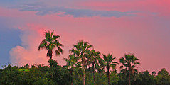 Crude Landscape, Pinellas County, Florida (gg1electrice60) Tags: sunset notasdramaticasbefore behindmyhouse takenfrommylanai lanscape scenery oldsmar laketarpon eastlake pinellascounty florida fl unitedstates usa us america canon40d canoneos40d canonflickraward pink sky trees