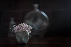 At home (V Photography and Art) Tags: terracotta pink duckblue dof 56mm bottles glass home
