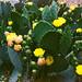 Cactus Close-Up  on Film