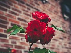 20180617-143005 Flower Garden Bokeh