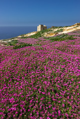 Gozitan spring (snowyturner) Tags: flowers cliffs malta gozo clover tower mediterranean limestone geology