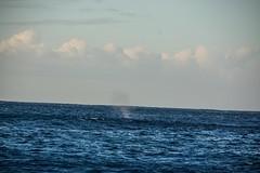Hawaii_2017_1130 (Christen Ann Photography) Tags: 2017 dolphinexcursions dolphintour hawaii hawaii2017 holidays landscape november2017 ocean ohau usa whale