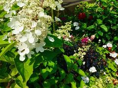 Flowers (i_kaya@rogers.com) Tags: plants photograph photography parks