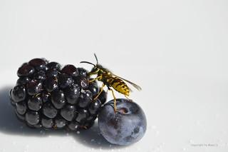 Die süssesten Früchte sind immer zuoberst * The sweetest fruits are always upstairs * Las frutas más dulces siempre están arriba *  . _DSC8156-001