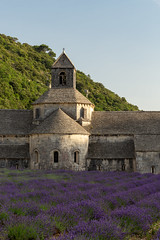 Abbaye Notre-Dame de Sénanque (Alex Schubert) Tags: abbaye notredame de sénanque senanque notre dame abadiá senhanca abbey lavande lavendel lavandin lavender sunset france nature summer july roadtrip europe south old medieval gordes monks traditional magic provence var