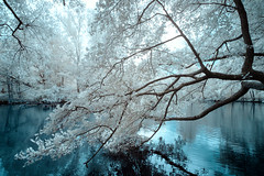 The gentle touch (gambajo) Tags: infrared infrated infrarot water pond lake trees nature park surreal blue white melancholic moody mood