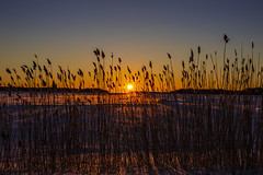 Frozen Sunrise (CraDorPhoto) Tags: canon canon6d landscape sunrise dawn morning reeds ice snow winter sun clearsky espoo finland