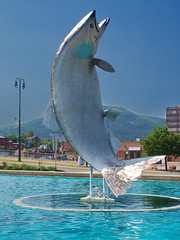 World's Largest Atlantic Salmon (nelhiebelv) Tags: