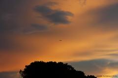 Sunset (Giada Cortellini) Tags: sunset trees aerplane plane sky redsunset italy italia