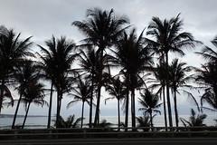entre route et mer (8pl) Tags: océan mer maritime palmiers route horizon taïwan côte côteest
