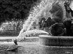 The big splash (Jean S..) Tags: blackandwhite bw monochrome fountain splash statue water turtle horse