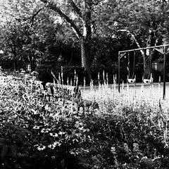 Les tout petits dorment encore... (woltarise) Tags: 6h30am montréal airedejeu balançoires bébés fleurs blanc petitmatin montroyal quartier plateau iphone7
