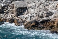St. Croix Island (zenseas) Tags: africa algoabay sunny southafrica whitebreastedcormorant africanpenguin capecormorant phalacrocoraxlucidus phalacrocoraxcapensis indianocean vacation holiday spheniscusdemersus stcroixisland