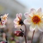 Mittwochsblümchen thumbnail