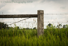 Stand True (HFF) (13skies (Cast off, brace on. Healed but still sore) Tags: true truth fence fences grass happyfencefriday wirefence wood post sky wire upright field barrier stayout sonyalpha99 countryroad sideroad alone farms hff