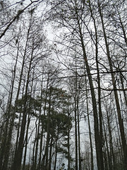 Wooded Area. (dccradio) Tags: lumberton nc northcarolina robesoncounty outdoor outdoors outside tree trees nature sky cloudy natural overcast greysky graysky godshandiwork godscreation jacobswamp swampland swamp swampy wooded woods forest spring springtime canon powershot elph 520hs