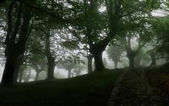 laiñoak 1 (juan luis olaeta) Tags: paisajes landscape fog laiñoa natura nieblas forest basoa bosque canon