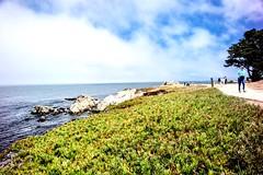 Monterey, CA (Be Steel) Tags: summer california pacificgrove monterey voigtländer21mmf4 voigtlander leicam240 leica