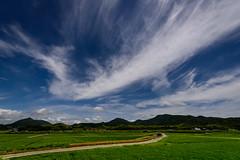 夏の情景ーSummer scene (kurumaebi) Tags: yamaguchi 秋穂 山口市 nikon d750 nature landscape 田 田んぼ ricefield cloud 雲