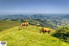 Paysage (https://pays-basque.coline-buch.fr/) Tags: 2018 64 aquitaine aquitainelimousinpoitoucharentes colinebuch france lasoule paysbasque pyrénéesatlantiques tardets campagne chevaux croix montagne nature paysage