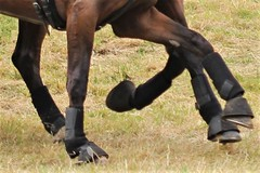 1721 GALOP D'EMBROUILLE (rustinejean) Tags: rustine cheval horse galop sabots jambes marron course vert pre