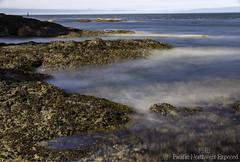 High Tide 1960 (All h2o) Tags: ocean beach sea seaside wave tide water pacific northwest olympic peninsula rock landscape salt creek crescent bay port angeles washington state
