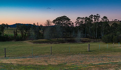 Sunset Rural Landscape (Merrillie) Tags: landscape sunset gumtree australia rural hill newsouthwales dusk trees country scenery tree cows acreage gresford farm twilight countryside property