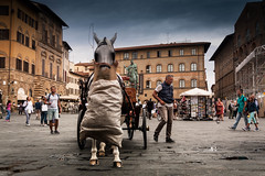 Florence horse (bergerfabian1989) Tags: itali florence canon sigma horse cheval 1750 28 place travel