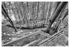 Going down the hill (leo.roos) Tags: mønsklint cliff klif forest wood bos stairs staircase stairway trap descent afdaling noiretblanc møn denmark denemarken sonycarlzeissvariotessarfe1635mmf4zaoss variotessar16354 sel1635z variotessartfe41635 sonycz16354 swedenspring2018 a7rii darosa leoroos