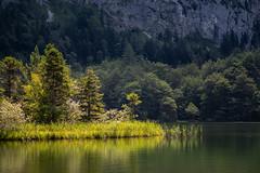 Laudachsee Idylle (jochenlorenz_photografic) Tags: austrianlandscape landscapelovers landscape landschaftsaufnahme lakeside salzkammergut upperaustria oberösterreich österreich austriannature sunshine naturallight naturwunder inexplore explore outdoor