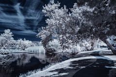Pathway By The Lake (Bill Gracey 20 Million Views) Tags: infrared infraredphotography ir convertedinfraredcamera channelswapping trees clouds water reflections naturalbeauty composition contrast