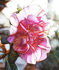 Nature provides exceptions to every rule. (Margaret Fuller) (boeckli (On Vacation)) Tags: azalea azalee flowers flower flora fleur garden garten blume blumen blüten bloom blossom blossoms blooms pink rosa bunt farbig ddg deepdreamgenerator