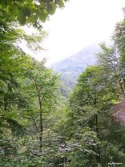 green Valsesia (archgionni) Tags: landscape boschi wodds alberi trees rami branches foglie leaves verde green