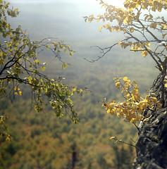 2018-08-10-0001_web (lazagreev) Tags: film120 shootfilm салютс fujicolor filmisnotdead nature deepforest