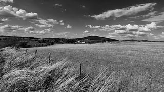 Mono meadow