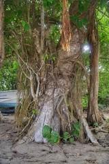 (fabhuleux) Tags: jungle wood france 6d canon antilles martinique arbre street nature
