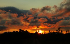 Shepherd's Delight..x (Lisa@Lethen) Tags: sunset clouds colours trees silhouettes weather nature outdoor