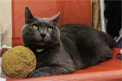 LMV_2141(1) (Lucio_Vecchio) Tags: nikon zafira gatos cats mascotas friends amigos retratos animales