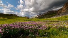 Fleurs des Alpes (Gilles Bourdreux Photography) Tags: france fleurs alpes prairie montagne mountain mont paysage landscape ciel champs sky lac lake nikon nuages nature randonnée ngc