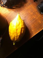 Etrog (Lovebirdzl) Tags: fruit etrog esrog ripe fresh sukkos sukkot citron citrus jewish holiday