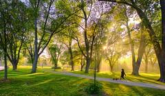 perfect morning (DeZ - photolores) Tags: royalcitypark guelphcanada park trees sunrise sunrays shadows people dog hdr nikon nikond610 nikkor nikkor1424mmf28 dez urban