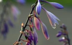 nature's language ῼ 24 (DeZ - photolores) Tags: flowers sunset plant bokeh macro hdr nikon nikond610 tamron90mmf28 dez details guelphcanada royalcitypark