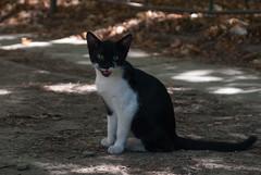 Smiling cat (Vucko234) Tags: cat animal smile outdoor nikon rrrr vuckobre 3570 nis
